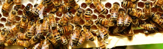Caride, Taliaferro & Houghtaling Bill to Protect Pollinating Bees from Pesticides Signed into Law